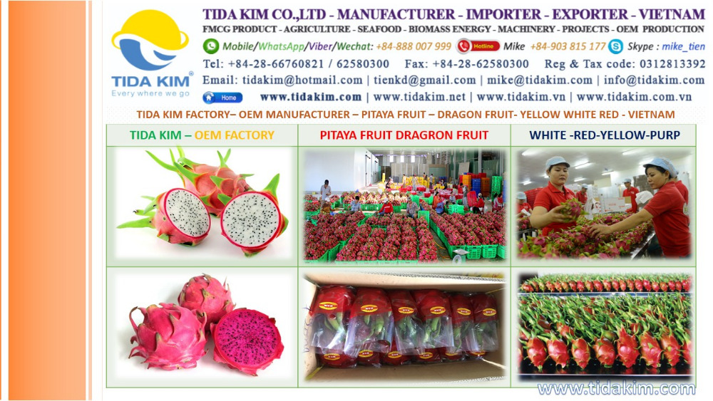 RED WHITE SKIN DRAGON FRUIT TIDA KIM PITAYA FRUIT EXPORTER VIETNAM DRAGON - DURIAN FROZEN PASTE CHIP- DRAGON FRUIT EXPORTER