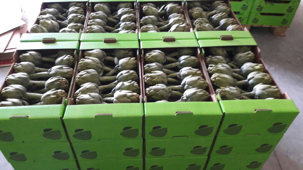 Artichoke, Mediterranean White Artichoke , Fresh  Vegetable