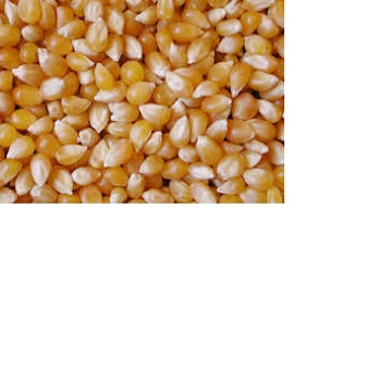 Bulk Feed Corn For Sale,Yellow Corn Animal Feed Manufacturers - Buy Yellow  Corn For Animal Feed Grade Product on Alibaba com