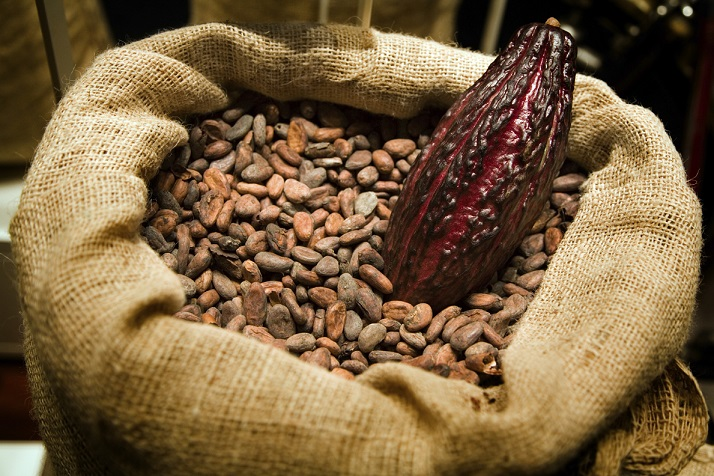 Best Cacao Beans +Dried Criollo Cocoa Beans +Dried Fermented Cacao +Dried Raw Cocoa Beans +Organic