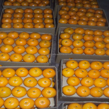 Fresh Top Quality mandarin