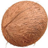 Fresh Organic Mature coconut / Semi Husked Coconuts with Best and reasonable Price