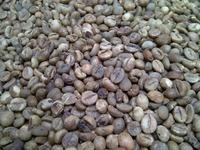 Wholesale Green Arabica coffee beans