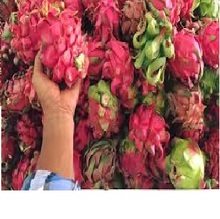 <span class=keywords><strong>Merah</strong></span> dan Putih Dragon Fruit 2020/WhatsApp + <span class=keywords><strong>84</strong></span> 845 639 639