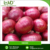 Ultimate Quality Fresh Red Onion in Bulk By Top Exporter of India