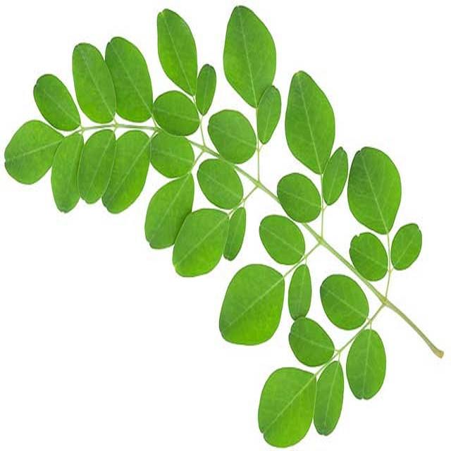 Health Benefits Of Indian Organic Moringa Powder Leaves - Buy Moringa Leaf  Powder Price,Moringa Pellets,Moringa Leaf Product on Alibaba com