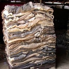 100% Wet Salted Donkey Hides And Wet Blue Cow Hides PURE LEATHER