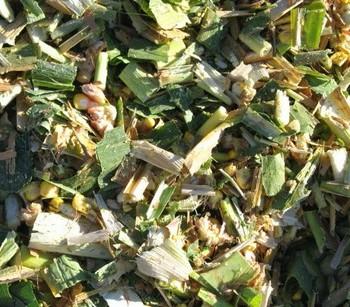 Silage Inoculant - Green Fodder - Dried Corn Silage Whatsapp +84 845639639