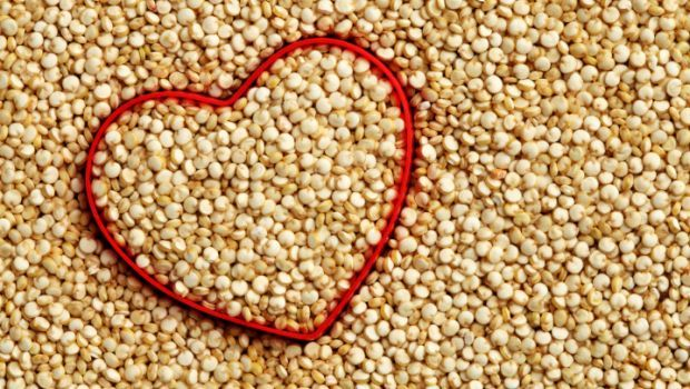 Bulk White Sorghum at competitive prices