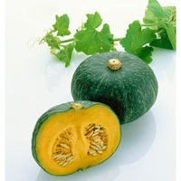 Pumpkin fresh best quality and cheap price product from Hong thai Farm viet nam 2019