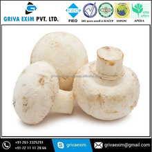 Hot selling cultivating fresh mushroom low price mashroom production