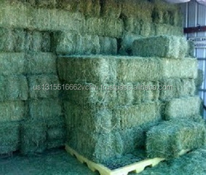 High Protein Alfalfa Hay For Animal Feeds