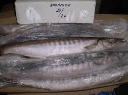 350-450g ribbon fish frozen ribbon fish excellent quality