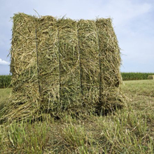 Alfalfa Hay, Timothy Hay and Grass Hay for sale