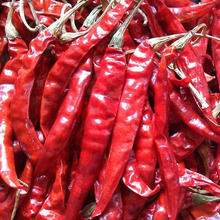 KERING MERAH <span class=keywords><strong>INDIAN</strong></span> CHILLI