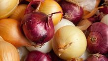 Lowest price fresh red onion in bulk