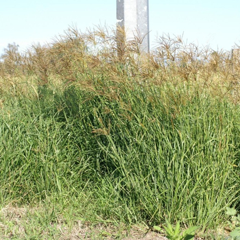 rhodes grass hay buy grass hay pellets alfalfa hay timothy hay