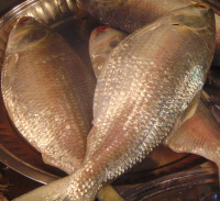 Bangladeshi local River water Hilsha fish