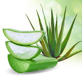 "Image search result for ""aloe vera"""