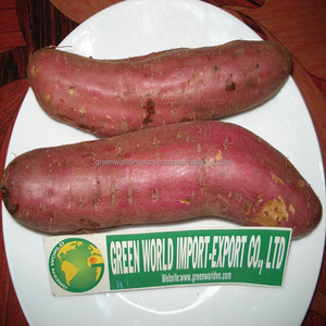 FRESH YELLOW SWEET POTATOES WITH CHEAP PRICE NOW