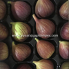 /product-detail/fresh-fig-exporter-in-india-62000264308.html