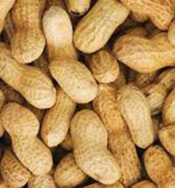 Peanuts Tasty Crunchy Nutritious Delicious Snack Full of Vitamins and Minerals