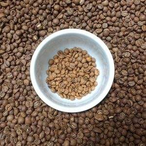 Premium Luwak Peaberry Coffee Bean Export Quality