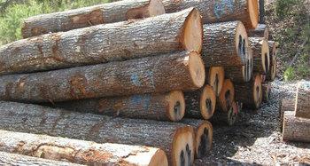 Raw Wood Logs Natural Teak Wood Burma Teak Buy Teak Wood