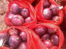 wholesale yellow and Red fresh onion for sale