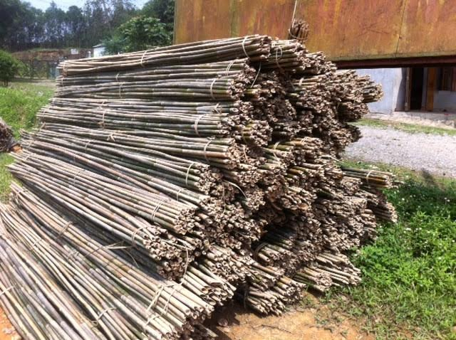 Eco-friendly Strong Dried Moso Bamboo Pole
