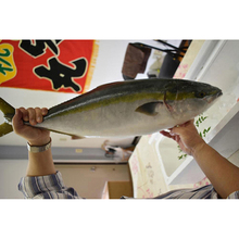 Highest standard fresh yellowtail frozen seafood importers in Japan