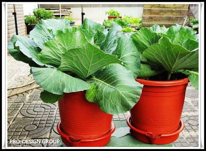 Self Watering 30 CM Flower Plastic Pot / Planter