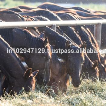 Equine Gut Health Probiotic Bulk Horse Feed - Buy Horse Gut Health  Probiotic Bulk Horse Feed,Horse Feed Additive Bulk Horse Feed,Horse Feed  Probiotics
