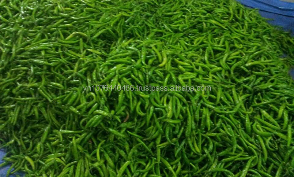 TOP QUALITY HOT SALE GREEN CHILI (Whatsup/viber/ talk:0084 907 886 929