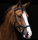 Horse Micklem Bridle FULL SIZE , Equestrian Leather Micklem horse bridle, Deluxe Micklem Horse Bridle