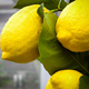 Fresh Organic Lemons Juicy Fresh Lemon/Meyer Lemons/Fresh Lime Eureka Lemon, Anyue lemon