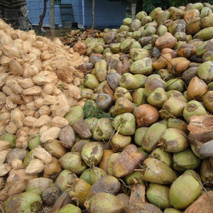 Coconut Uae, Coconut Uae Suppliers and Manufacturers at