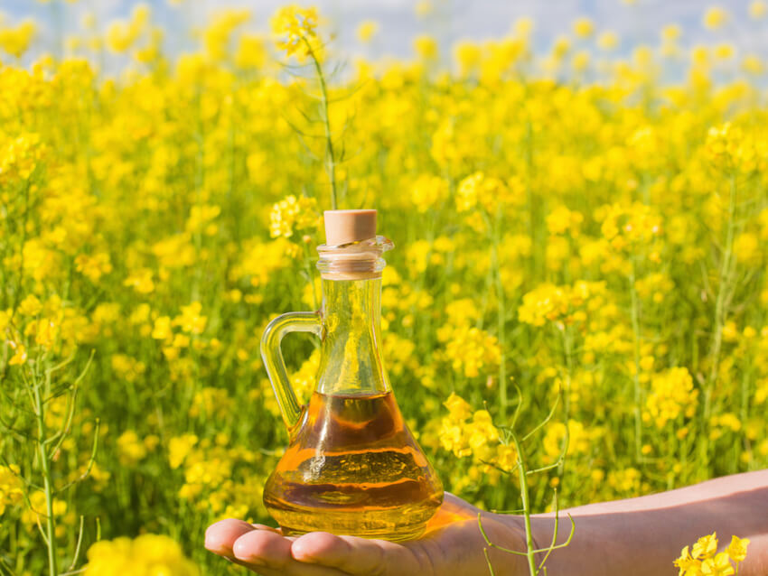 100 % Pure Refined Rapeseed Oil / Canola Oil