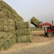 Grass From Pakistan Rhodes Grass Hay At very Attractive price