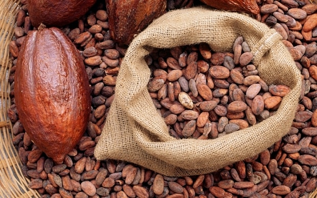 Grade A Dried Raw Cocoa Beans from Africa