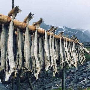 Dried Stockfish Cod,Saithe,Cod Fish, Head - Wholesale Prices