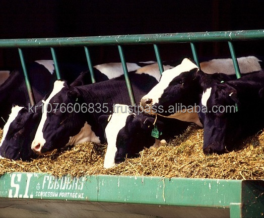 Organic Feed Additive for Cattle Farming Based on Natural Antioxidants
