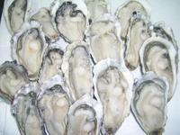 Frozen Oyster Seafood