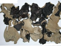 DRIED BLACK FUNGUS with HIGH QUALITY
