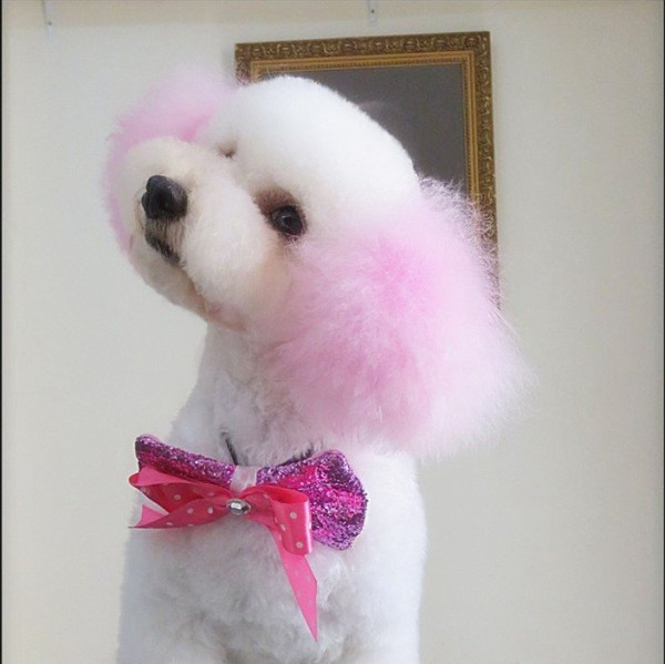 Colortour Organic Directly Use Pet Dog Hair Dye - Buy Dog Hair Dye,Directly  Use Pet Hair Color,Organic Hair Dye Product on Alibaba.com