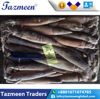 high quality seafood illex whole round sale frozen squid
