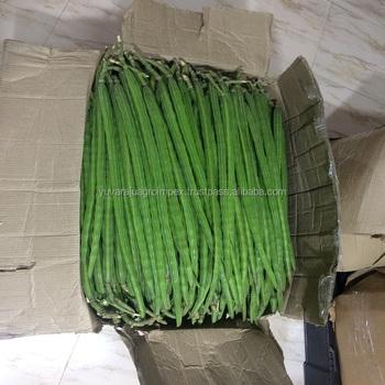 Fresh Vegetables Drumstick Exporter In India To  Uk/usa/uae/malaysia/singapore/maldives/canada/ Australia - Buy Fresh  Vegetables Drumstick/moringa