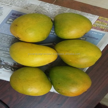 Indian Alphonso Mango Export Quality - Buy Alphonso Mangoes Exporters From  Andhra Pradesh,Ratnagiri Alphonso Mangoes,Fresh Alphonso Mangoes From India