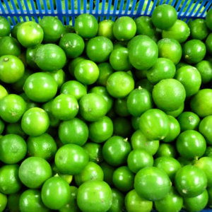 High quality Vietnam green seedless lime for sale whatsapp +84 845 639 639