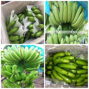 Fresh Cavendish Banana price for buyers